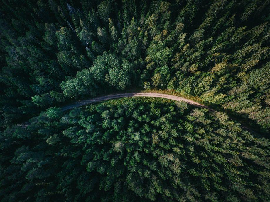 Støt op om en bæredygtig model for skovudnyttelse